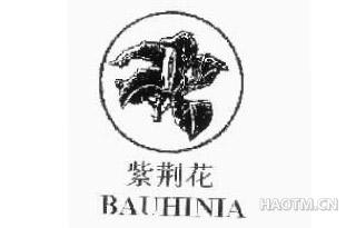紫荆花 BAUHINIA