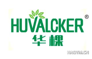华棵 HUVALCKER