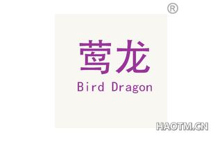 莺龙 BIRD DRAGON