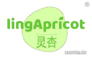 灵杏 LINGAPRICOT